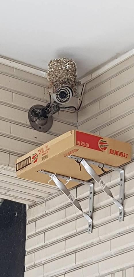 監視器上的燕子窩
